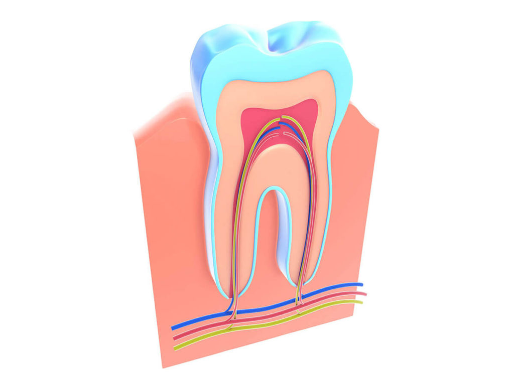 illustration of root canal of tooth